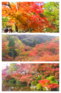 Collage 2013-11-24 13_00_13