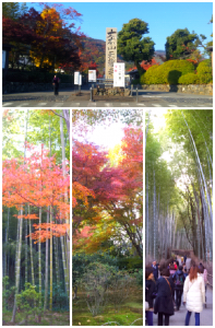 Collage 2013-11-24 13_00_28
