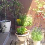 GWは家でゆったり、そしてお花のお世話、犬たちの検診…アトレ恵比寿の西館オープン、そして母の日の贈り物♪