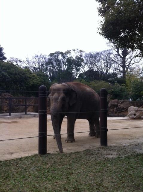 erephant